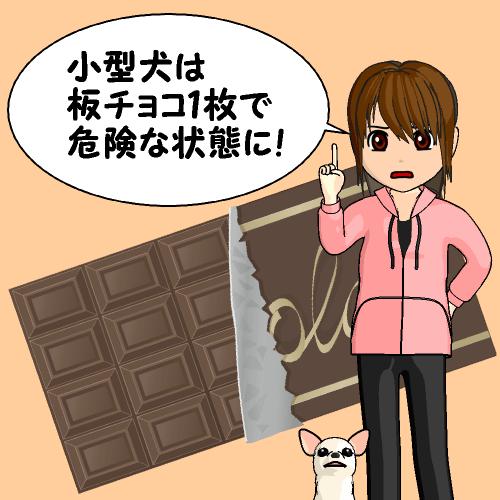 小型犬は板チョコ1枚で危険な状態に!
