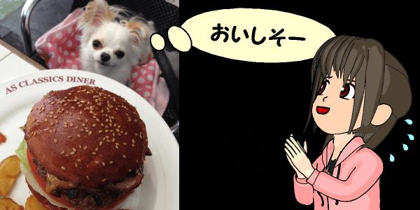 犬と人間に必要な栄養素の違い