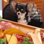 犬は肉食性雑食