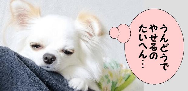 肥満の犬におすすめの無添加ドッグフード