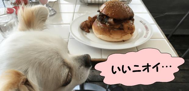 犬の嗅覚と味覚