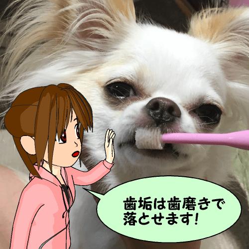歯垢は歯磨きで落とせます!