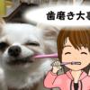 犬も歯磨き大事!