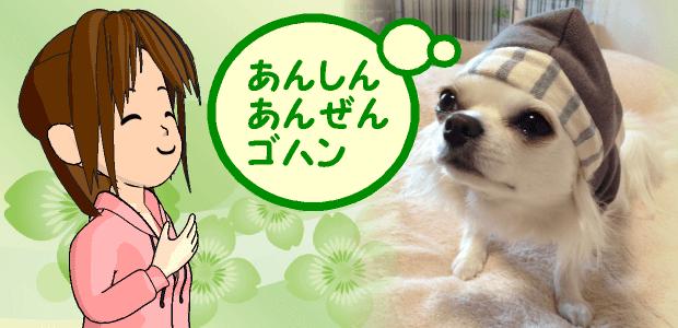 犬の安心安全ゴハン