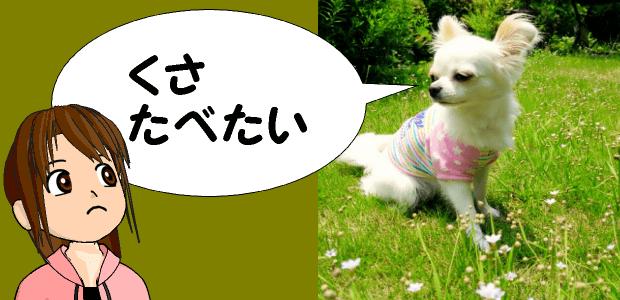 犬が草を食べても大丈夫?
