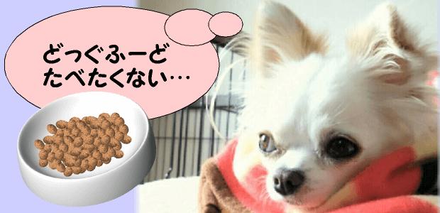 ドッグフードを食べない時の対処法