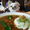 犬が人間の食べ物を欲しがる時の対処